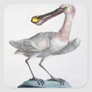 Pelican, c.1767-76 (hand coloured engraving) square sticker