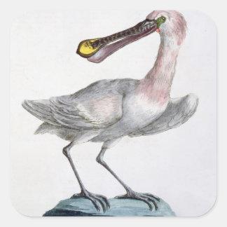 Pelican, c.1767-76 (hand coloured engraving) square sticker