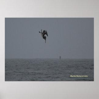 Pelican Dives Posters