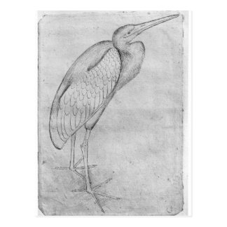 Pelican, from the The Vallardi Album Postcard