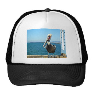 pelican hat