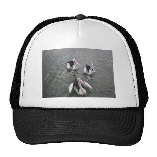 Pelican Mesh Hat