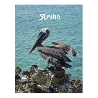 Pelican in Aruba Postcard