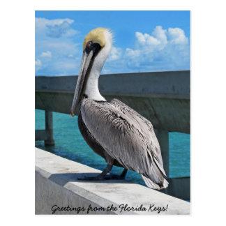 Pelican in the Florida Keys postcard