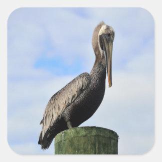 Pelican in the wild square sticker