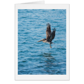 Pelican in water card
