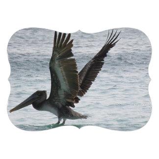 Pelican Announcement