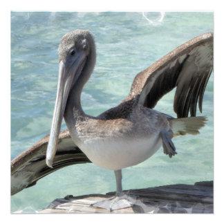 Pelican Invitations