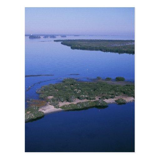 Pelican Island Post Card