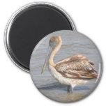 Pelican Magnets