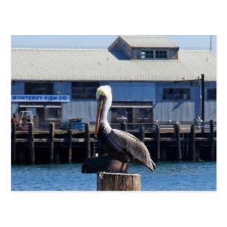 Pelican Monterey, California Postcard