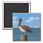 Pelican on a Post Magnet