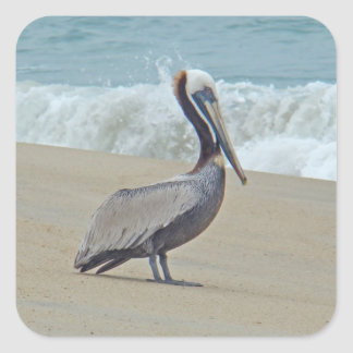 Pelican on Outer Banks OBX NC Square Sticker
