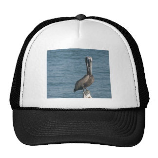 Pelican on Piling Mesh Hats