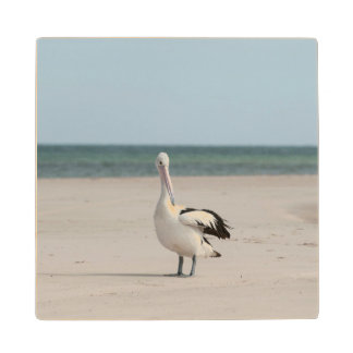 Pelican on the beach, Australia Wood Coaster