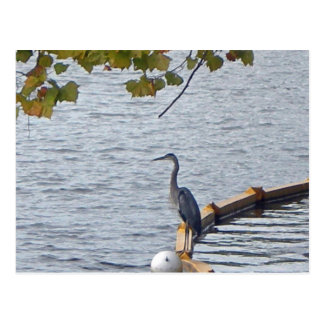 Pelican on the Potomac Post Cards