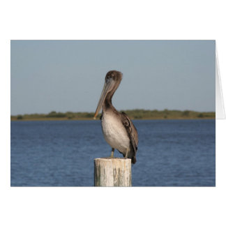 Pelican Photo Greeting Card