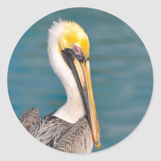 Pelican Portrait Close Up with Ocean in Background Classic Round Sticker