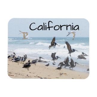Pelican Tern Birds Wildlife Animals Beach Magnet