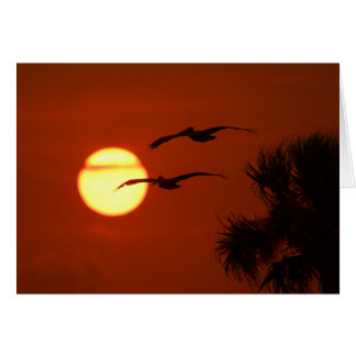 Pelicans at Sunset Card