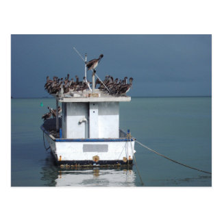 Pelicans at the Wharf, San Fernando, Trinidad Postcard
