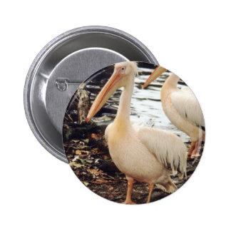 Pelicans Pins