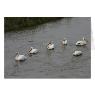 Pelicans Floating On River Greeting Card