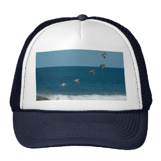 Pelicans flying in formation, Costa Rica Hat