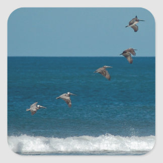Pelicans flying in formation, Costa Rica Square Sticker