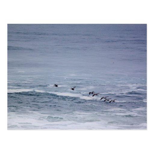 Pelicans Gliding Across Ocean Waves Postcard