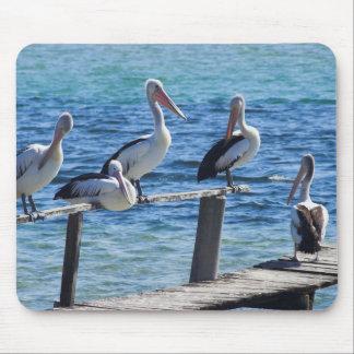 Pelicans Mouse Mat