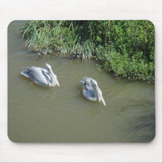 Pelicans Mousepad