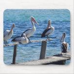 Pelicans Mouse Pads