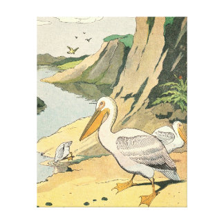 Pelicans on a Rocky Beach Stretched Canvas Print