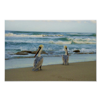 Pelicans on Jensen Beach in Florida Poster