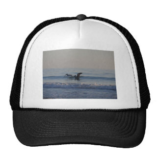 pelicans on the beach cap
