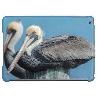 Pelicans roosting on pylon