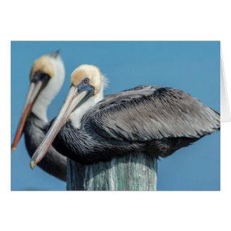 Pelicans roosting on pylon card