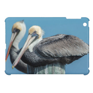 Pelicans roosting on pylon cover for the iPad mini