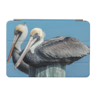 Pelicans roosting on pylon iPad mini cover