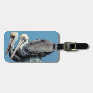 Pelicans roosting on pylon luggage tag