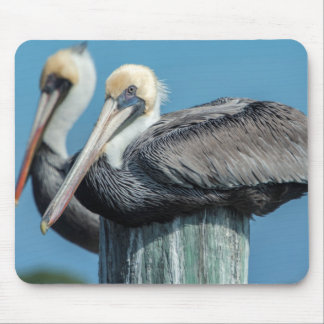 Pelicans roosting on pylon mouse mat