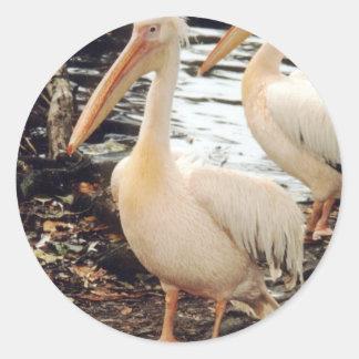Pelicans Round Sticker