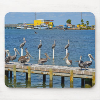 Pelicans Sunbathing Mouse Mat