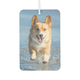 Pembroke Welsh Corgi Dog Running On The Beach