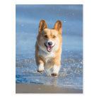 Pembroke Welsh Corgi Dog Running On The Beach Postcard