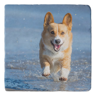 Pembroke Welsh Corgi Dog Running On The Beach Trivet