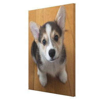 Pembroke Welsh Corgi Puppy 3 Canvas Print