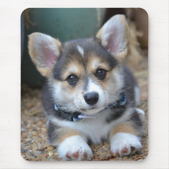 Pembroke Welsh Corgi Puppy Mouse Mat