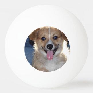pembroke welsh corgi puppy.png ping pong ball